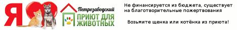 Петрозаводский общественный приют для животных